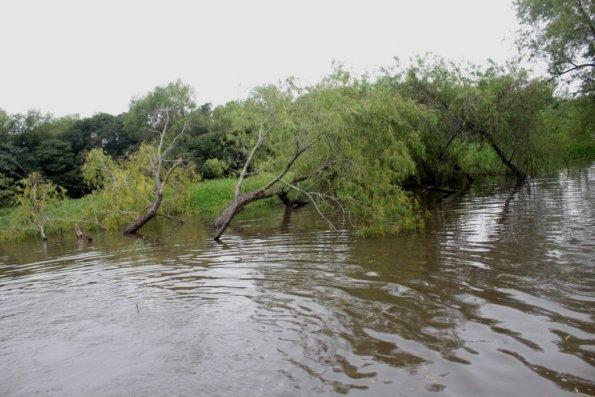 Esperan nueva crecida del río Paraná
