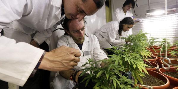 Una obra social deberá cubrir el aceite de cannabis para una nena con discapacidad