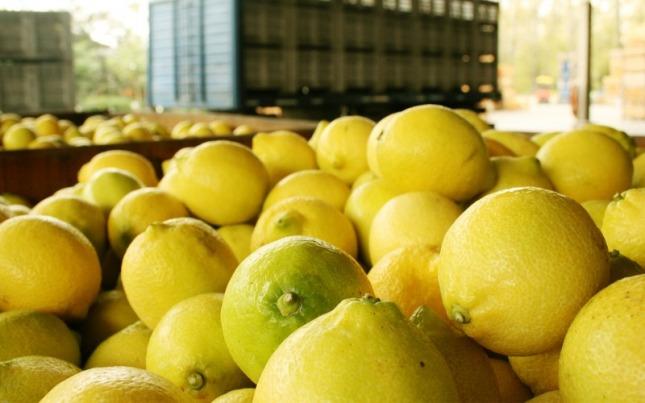 Ahora los limones van a China: el jueves parte el primer embarque tucumano