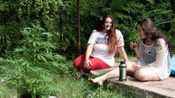 """Trataba su artritis y artrosis con cannabis y terminó detenida por """"cultivo y posesión de estupefacientes»"""