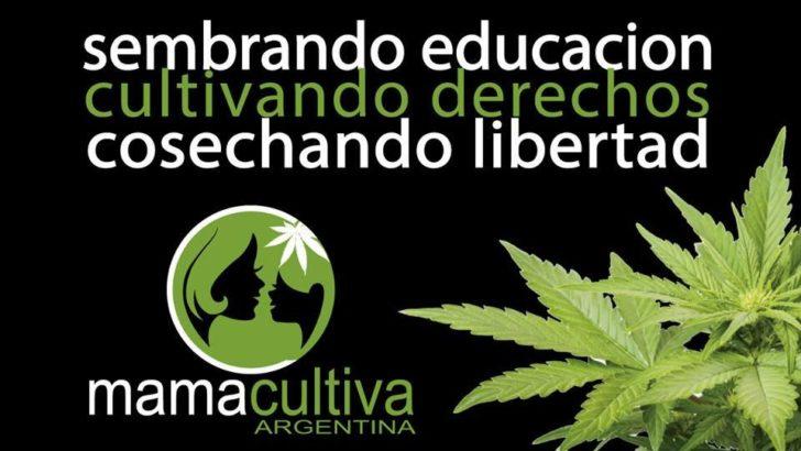 El Senado trata sobre tablas el proyecto para autorizar el uso de cannabis medicinal