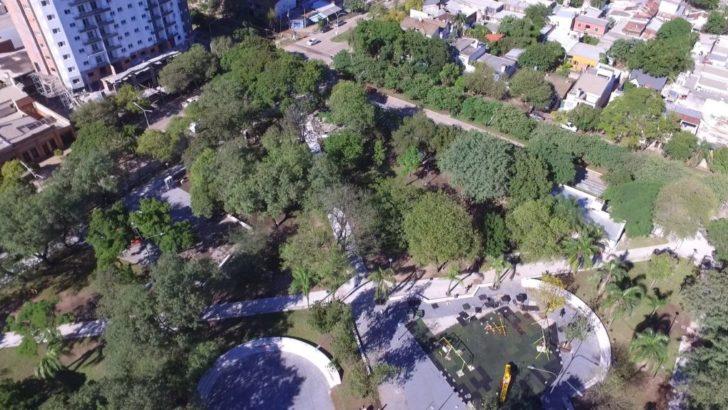 Arbolado urbano: realizarán 3.601 podas, 1.462 extracciones y plantarán 7.500 árboles
