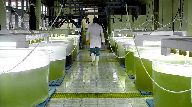 Recalculando: duplicaron retenciones a las exportaciones de biodiesel