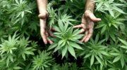 Ordenan a una obra social que provea de cannabis a un niño con epilepsia refractaria