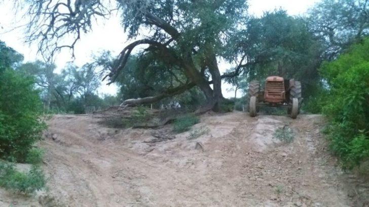 Denuncian la explotación masiva de los montes chaqueños en tierras públicas