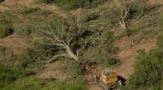 Greenpeace expresa su preocupación por supuesto desmonte en finca La Fidelidad