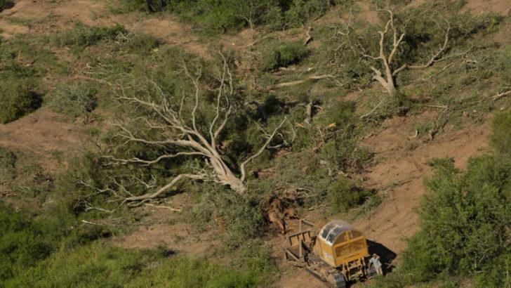 La Justicia ordenó suspender desmontes en zonas amarillas