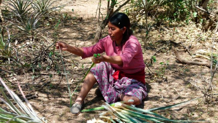Medicina wichí: identifican más de 100 plantas con más de 400 usos medicinales