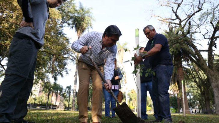 En la semana se plantarán mil árboles en toda la ciudad