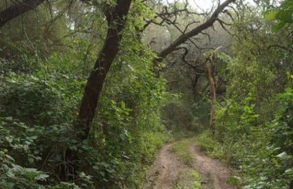 El Impenetrable: estudian alteraciones y cambios en el uso de los recursos naturales 1