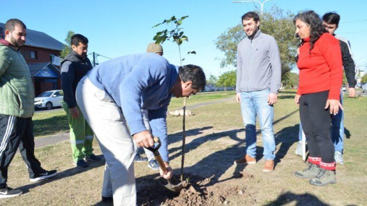 Resistencia, camino a los 40 mil árboles implantados, en cuatro años de gestión