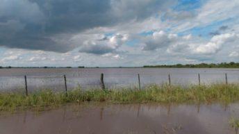 Algodón, girasol y trigo: Producción evalúa daños causados por las últimas lluvias
