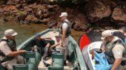Tras una persecución a los tiros, secuestran unos 300 kilos de marihuana en el río Paraná