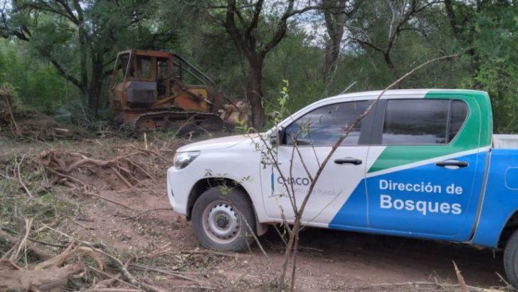 Desmonte ilegal: Bosques brindó precisiones sobre los operativos