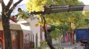 Desarrollaron un operativo integral de poda de árboles sobre avenida Rodríguez Peña