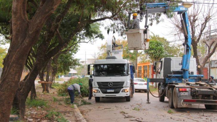 Extendieron los operativos de poda controlada a distintos barrios