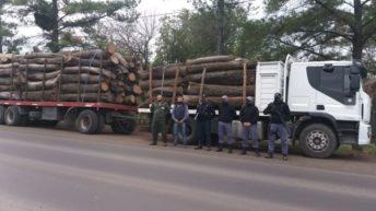Incautaron 26 mil kilos de algarrobo por irregularidades en el permiso forestal
