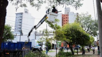 La Poda Responsable se extiende sobre la calle Liniers en la ciudad de Resistencia