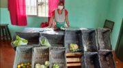 Registro de la Economía Popular: buscan formalizar 6 millones de trabajadores