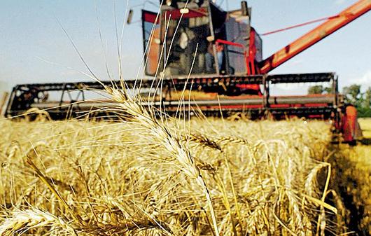 Por la sequía, la campaña de producción de trigo dejará entre US$ 600 y US$ 890 millones menos