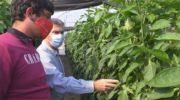 Entregaron módulos de cobertura para invernaderos a productores hortícolas