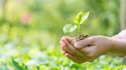 Buscan elevar a ministerio la Secretaría de Desarrollo Territorial y Ambiente