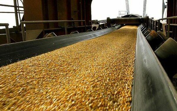 Levantaron la suspensión de las exportaciones de maíz hasta marzo 1