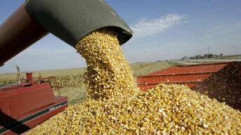 Levantaron la suspensión de las exportaciones de maíz hasta marzo
