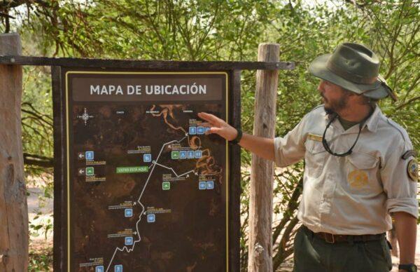 Medio ambiente: en 15 días se sabrá si está preñada la yaguareté Tania