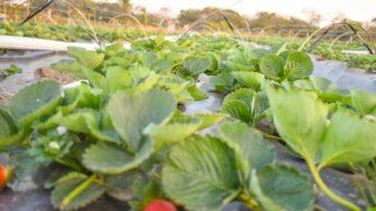 Convocan a frutihortícolas a registrarse en el Sipach