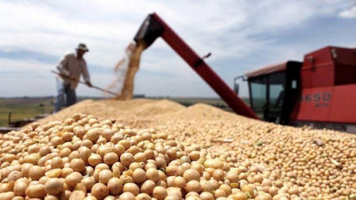 La soja alcanzó su valor más alto en nueve años, con 600 dólares la tonelada