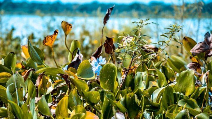 Laguna El Palmar: continúan las gestiones para la creación del parque nacional