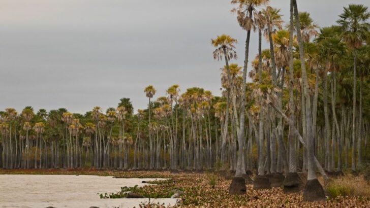 Avanzan en la creación de un nuevo parque nacional en la Laguna El Palmar