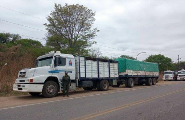 Contrabando de granos: Gendarmería secuestró 180 toneladas transportados en seis camiones en Salta 2