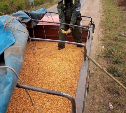 Contrabando de granos: Gendarmería secuestró 180 toneladas transportados en seis camiones en Salta