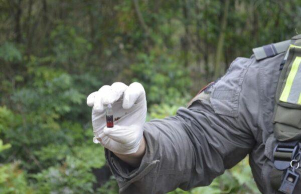 Misiones: Gendarmería secuestró 1.200 plantas de marihuana 1